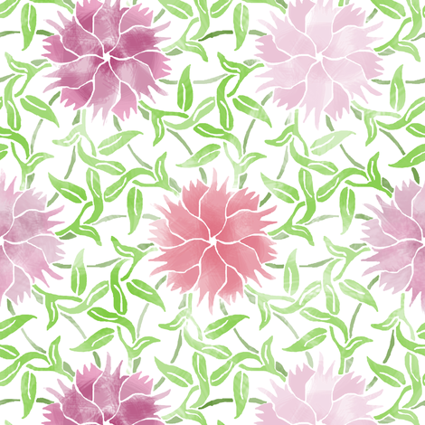 Dianthus flower on white