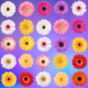 Happy colorful floral pattern