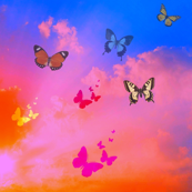 Beautiful sky with butterflies