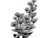 Rrrshell_fungi_thumb