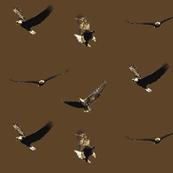 Four Flying Bald Eagles