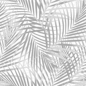 Palm leaf leaves in pale grey