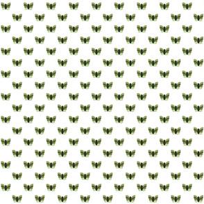 Green Butterflies on White