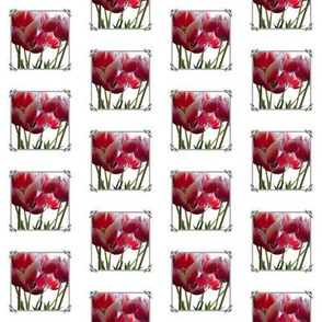 framed tulips - small auxillary