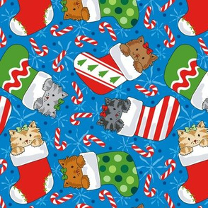 Christmas Stocking Kitties