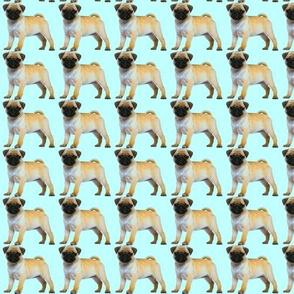 Pug Dog Blue