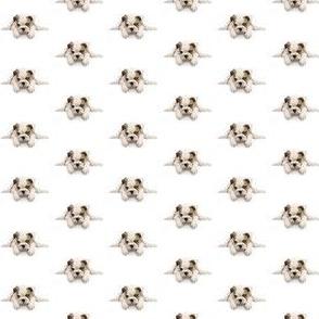 Cute puppy small