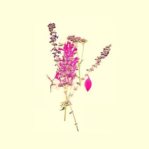 Pink Wildflowers on Pale Yellow - Large Scale