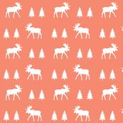 moose trot // coral
