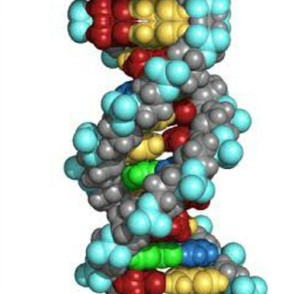 DNA LARGE