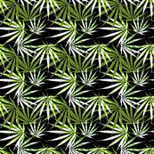 Sativa Green Black White