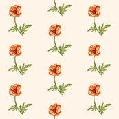 Poppy, Orange on Vanilla