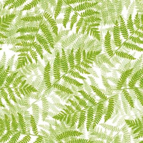 ferns on white