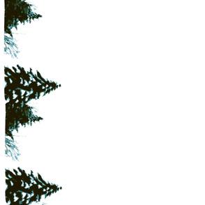 snowy trees border evergreen