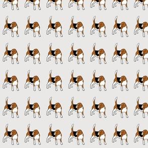 Rupert Beagle