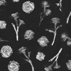Roses - 7