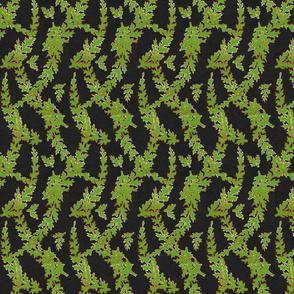 Filmy Ferns