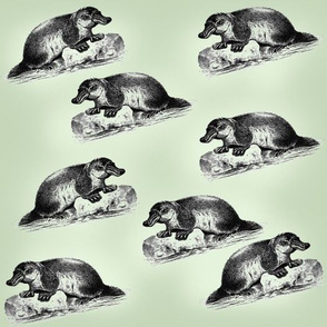Platypus Toile