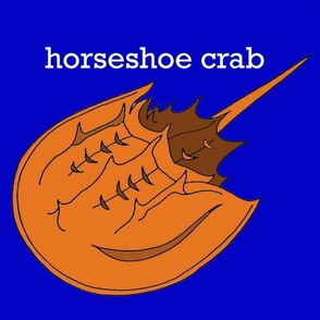 Horseshoe Crab on Bright Blue