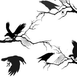 ravens webs