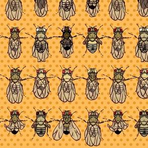 Drosophila Mutants Tangerine