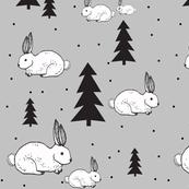 rabbitinsnow