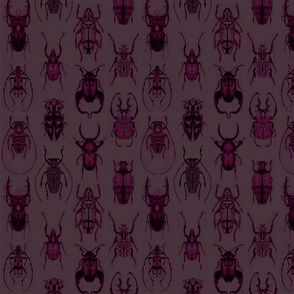 Pencil Beetles Purple