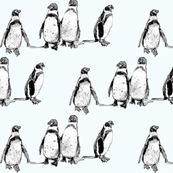 penguins ice