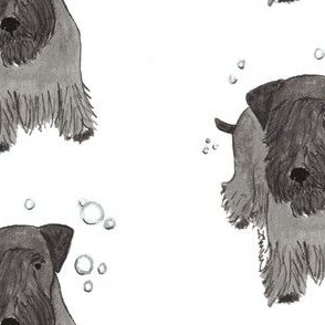 Cesky Terrier and Bubbles