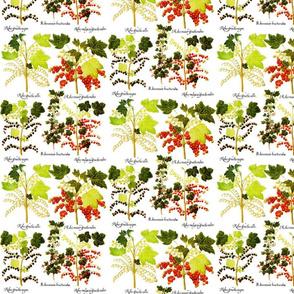Plants_ribes