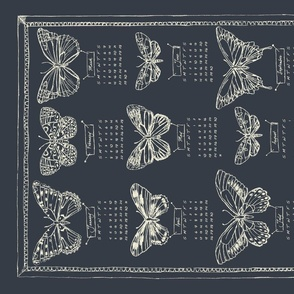 mounted_butterflies_gray