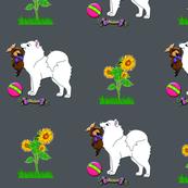 Samoyed Playtime