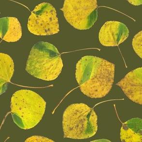 life-sized aspen leaves on bracken green