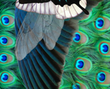 Wingedones2v_thumb