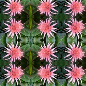 Pink spiky flower
