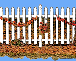 Rwhite_picket_fence_w-autumn_leaves_garland_blue_sky_thumb