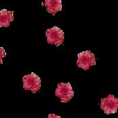 Burgundy Pink Rose