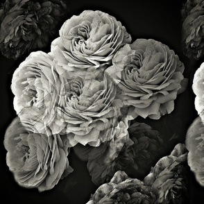 English Roses in Black and White