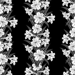 Black & White Lilies