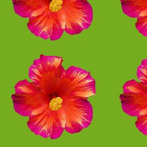 Rock n' Roll Hibiscus-Green