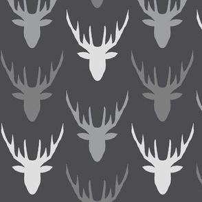 deers grey