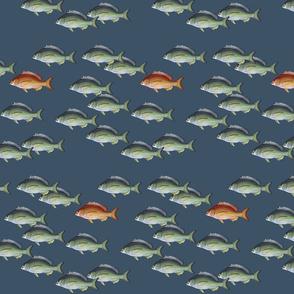 Fish in school with Orange