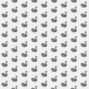 Baby grey swans