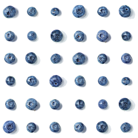 blueberry polka dots on white