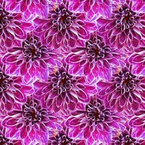 Pink dahlia Monet's Garden