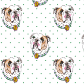 Bulldog with Green Polka Dots