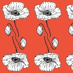 poppy_wallpaper_poppy red