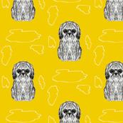 Alva the dog yellow