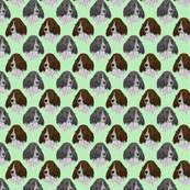 English Springer Spaniel faces - green