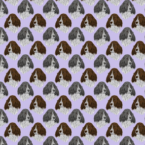 English Springer Spaniel faces - purple